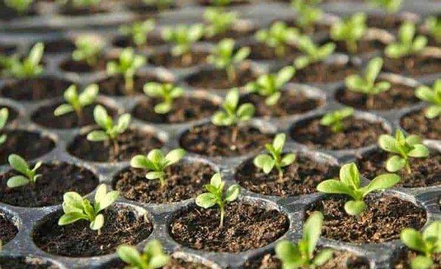 Plant nurseries near me in Ahmedabad - Nicelocal.in